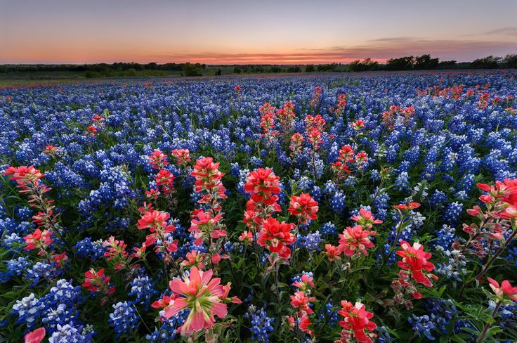 #Texas has some of the best family-friendly #vacation #destinations in the United States. Save big on your #trip!
