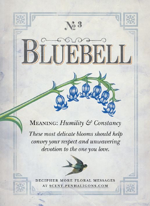 Bluebell Meaning: humility and constancy