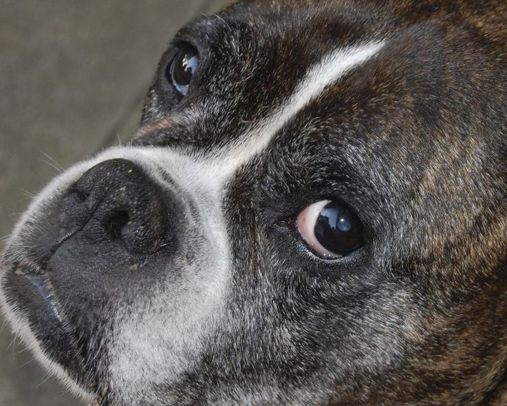A Pet Owner's Guide to Lumps and Bumps: What to Know About Growths on Dogs