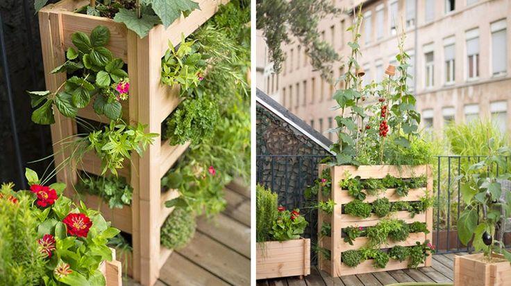 Idéal pour les petits jardins et les balcons en ville