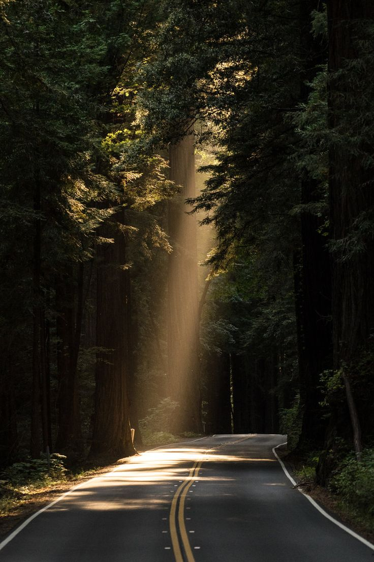 Free download of this photo: https://www.pexels.com/photo/sun-rays-goes-through-tree-on-concrete-road-132982 #light #road #landscape
