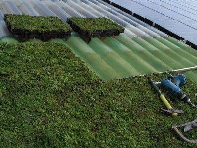 ... Toiture Végétalisée sur Pinterest  Patio en pierre bleue, Villa et