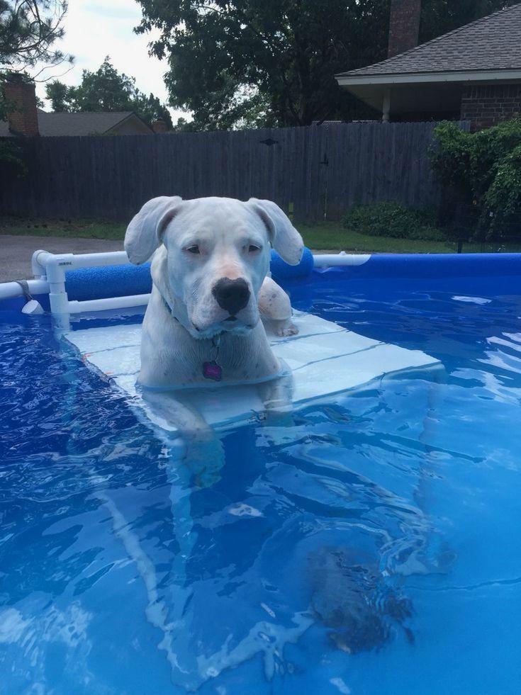 The Amazing Pool Landscaping Tricks Dog Swimming Pools Dog Pool Pool Decks