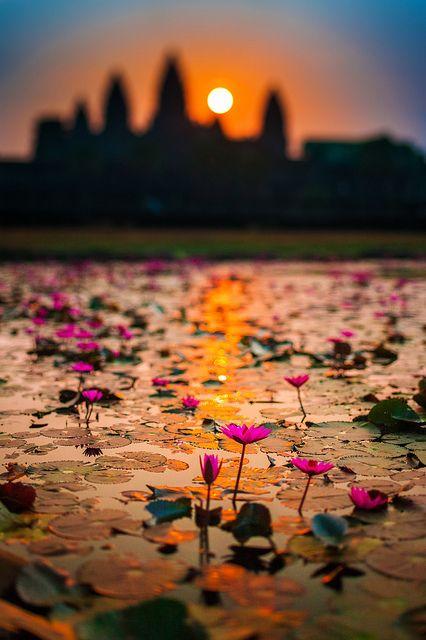 Sunrise in lotus flowers bloom, Angkor Wat, Siem Reap, Cambodia