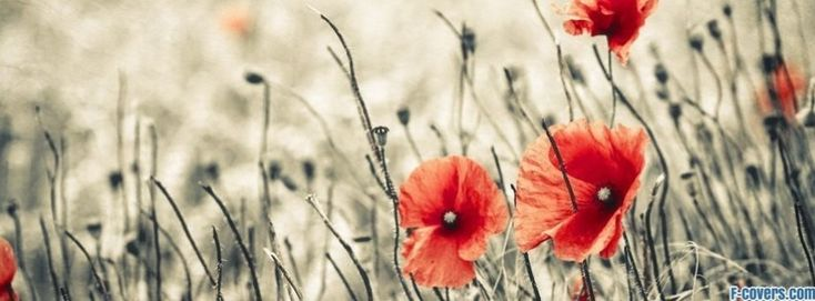 flowers poppy red 17 facebook cover