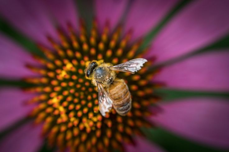 Bee © Makbet666 / View the portfolio at photographer-makbet666.579fa2804eee131843jiicdu7e579fa2804ef3b.html