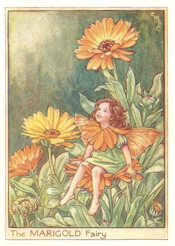 http://www.wellandantiquemaps.co.uk/lg_images/The-Marigold-Fairy.jpg