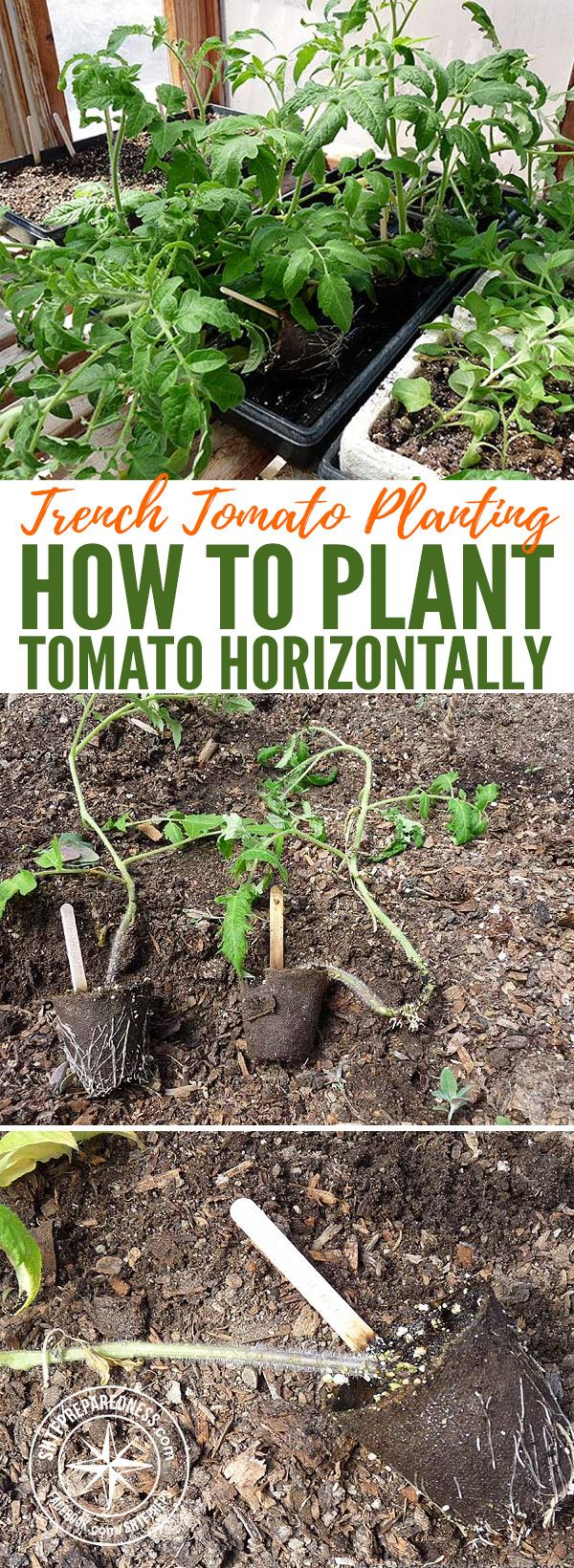 What is the best soil for tomatoes - 25 Best Ideas About How To Plant Tomatoes On Pinterest How To Grow Tomatoes Grow Tomatoes And Growing Tomatoes