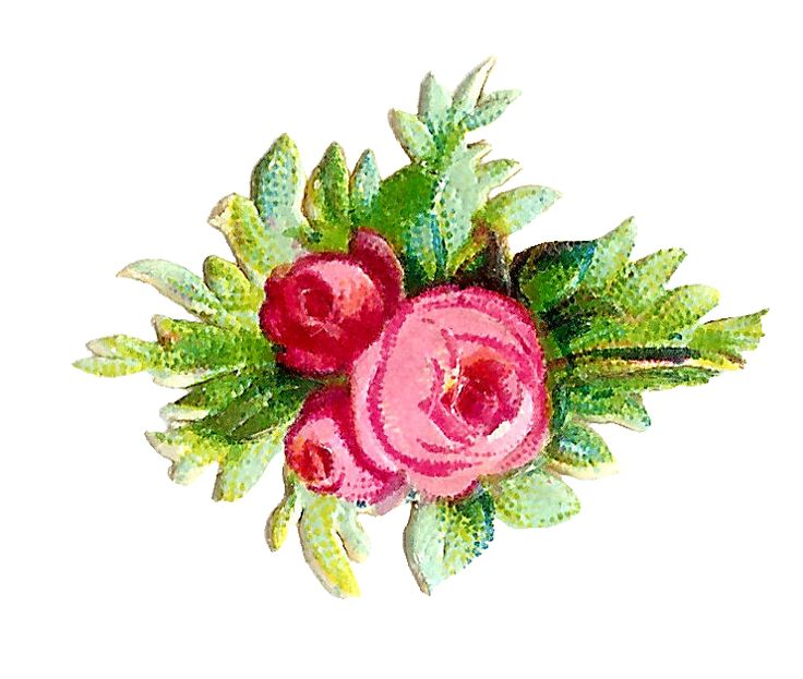 Antique Images: Free Flower Graphic: 3 Pink and Red Rose Digital Scraps