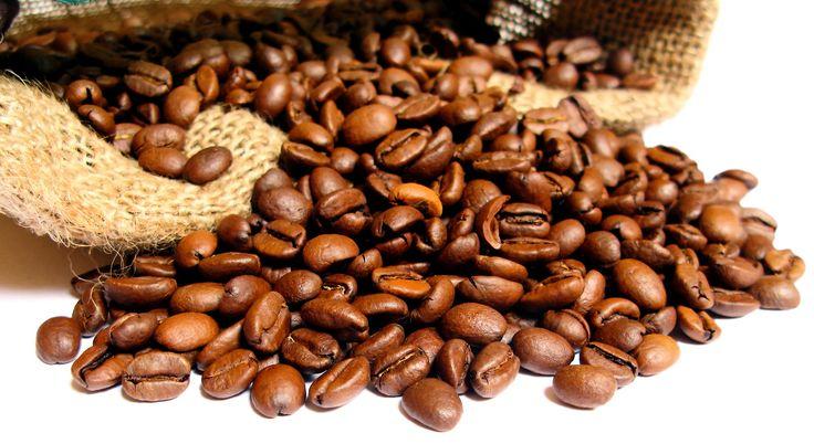 Le café arabica est le café de référence lorsqu'on parle de café de qualité. Seuls les cafés arabica sont des cafés pure origine et des café grand cru, ce n'est pas le cas du café robusta. Consommé sous le nom de café pure origine, de café d'Éthiopie, d'expresso moka, de café grand cru ou bien de café cappuccino, nous ignorons que bien souvent derrière se trouve tout simplement le café arabica.