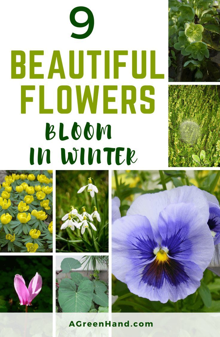 9 Beautiful Flowers That Bloom In Winter To Help Keep Your Area Visually Appealing We Ve Compile Beautiful Flowers Winter Garden Winter Vegetables Gardening