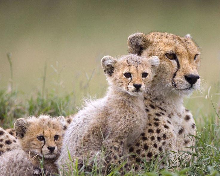 Animals Wild Animals Baby Animals