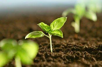 facilsimple: Germinar semillas en 4 pasos