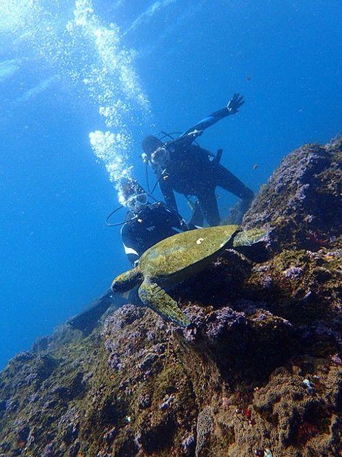 運が良ければウミガメに会えるかも!やってみたいダイビング体験。八丈島の見所!
