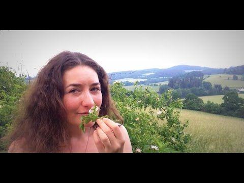 Růže šípková - využití bylinek Provoněný den - YouTube