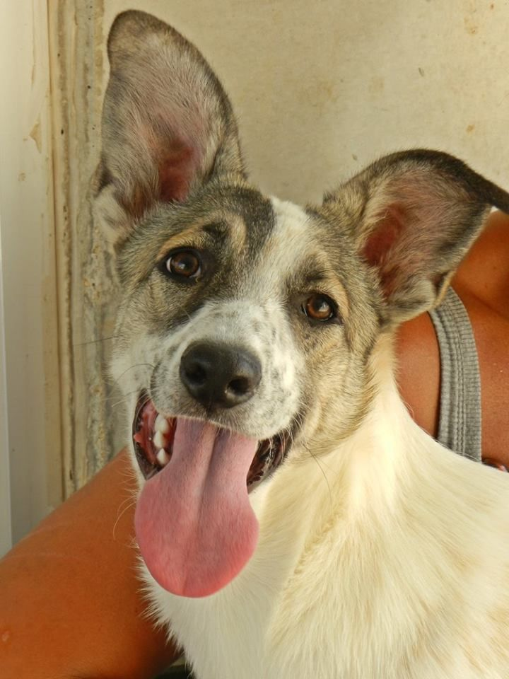 STRELLA cucciola meticcia 6 mesi, ancora in canile! - http://hormiga.it/strella-cucciola-meticcia-6-mesi-ancora-in-canile/ Adoption, Adozioni Cani, Adozioni urgentissime, Canili Gattili Rifugi