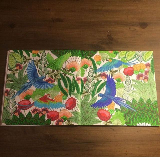 Tropical Birds Coloring Book Hobbies Costs Peacocks Sketching Instagram Wonderland Doodles