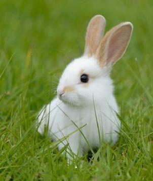 Best 20+ White Bunnies...