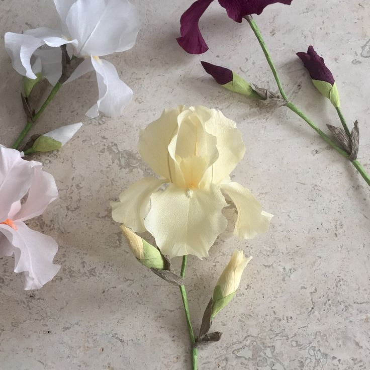 Crepe Paper Bearded Iris Single Stem Wedding от NectarHollow