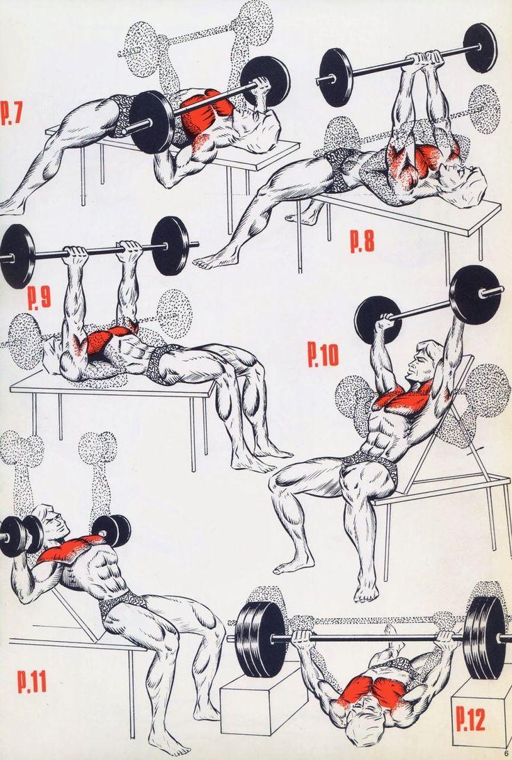 This a simple exercises for the begining's bodybuilding :        CHEST PROGRAM     SHOULDERS PROGRAM        SHOULDERS PROGRAM       BACK P...