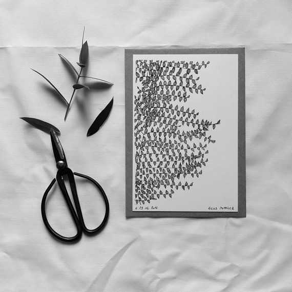 Ficus Pumila  Carte postale illustrée  dessin à par monocotyledone