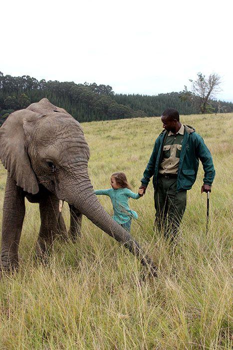 Daily Educational Elephant Tours | Knysna Elephant Park