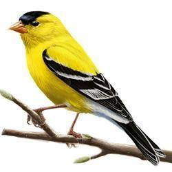 17 Best images about Birds on Pinterest | Bail bondsman ...