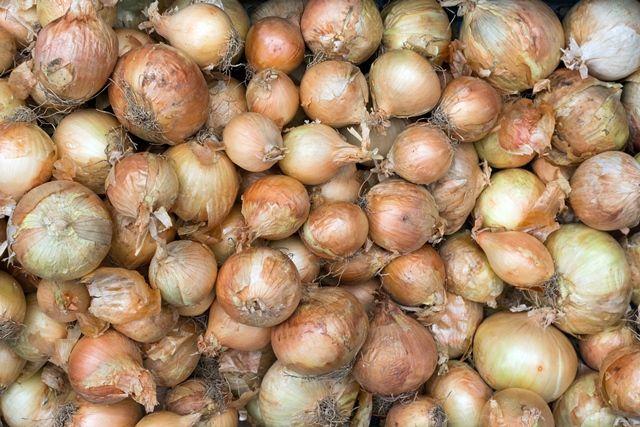 W krajach, w których cebula jest w dużych ilościach dodawana do potraw (Gruzja, Bułgaria) ludzie słyną z swojej długowieczności.