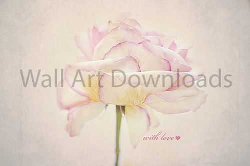 Pink Rose with Love Downloadable Image