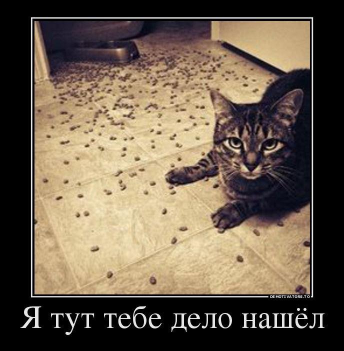 Кот засранец