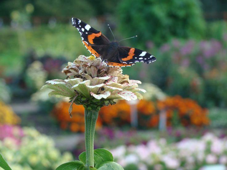 Skapa rum för fjärilar i trädgården.