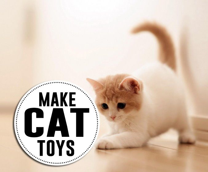 25 best ideas about cool cat toys on pinterest cat