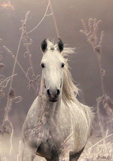 Rev 19:11 And I saw heaven opened, and behold a white horse; and he that sat upon him [was] called Faithful and True, and in righteousness he doth judge and make war.