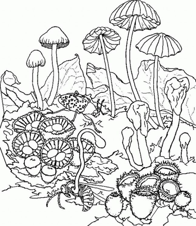 psychedelic mushroom coloring pages psychedelic mushroom c