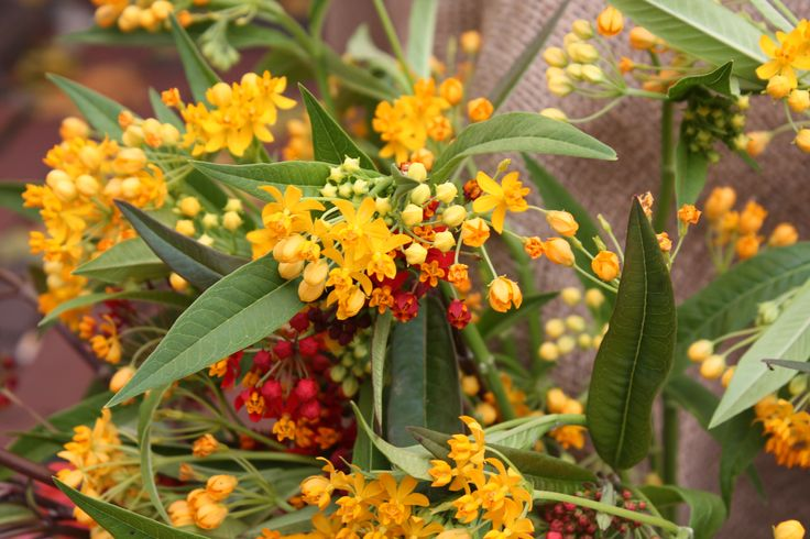 18 best september flowers images on pinterest farms. Black Bedroom Furniture Sets. Home Design Ideas