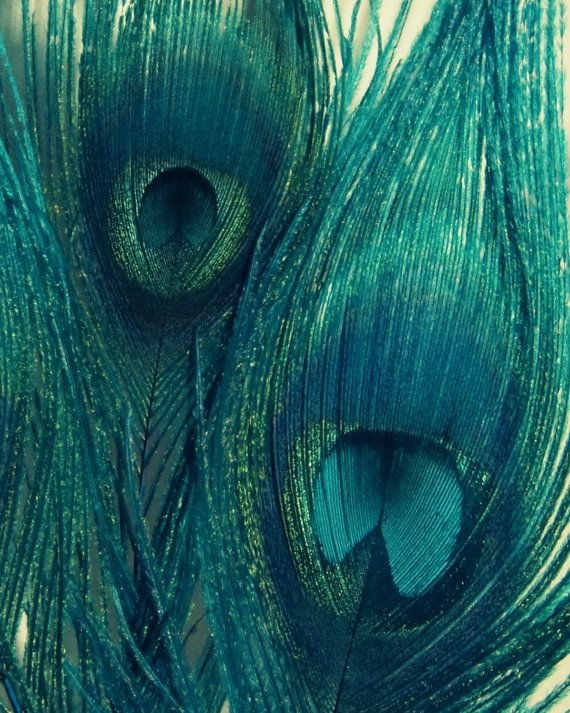 Teal Peacock Feathers - Bird Feathers, Wall Art, Blue Green Navy, Home Decor - Fine Art Photography, Metallic Finish - 8x10