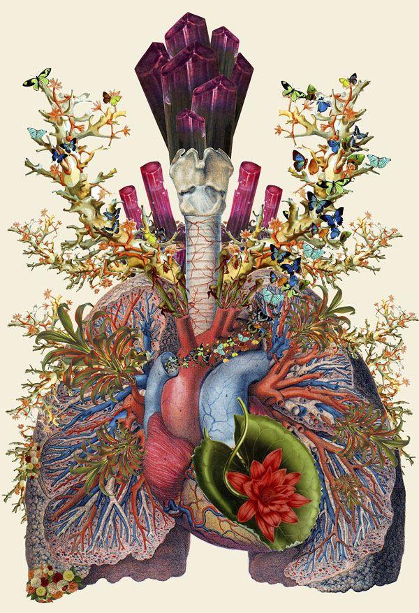 collage anatomie par Travis Bedel #collage #retro #vintage #fleur #flower #anatomy