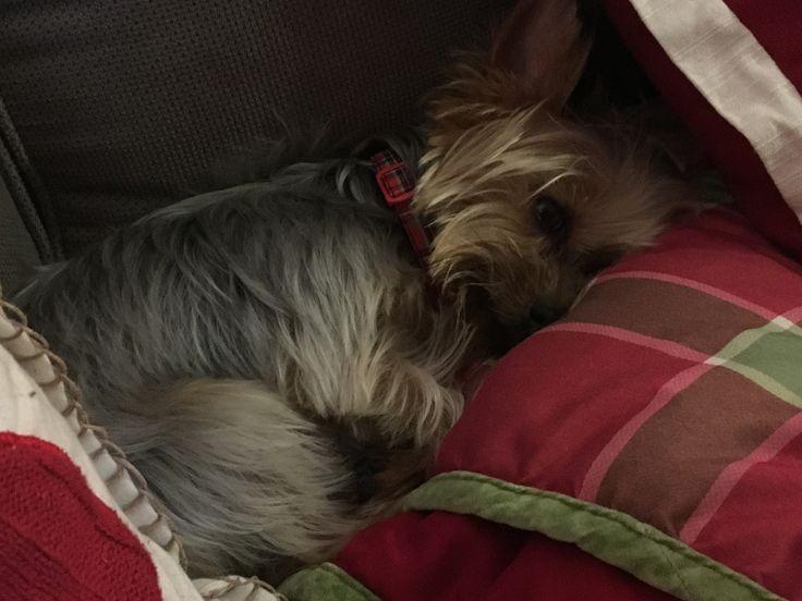 Shhh...I'm sleepy !