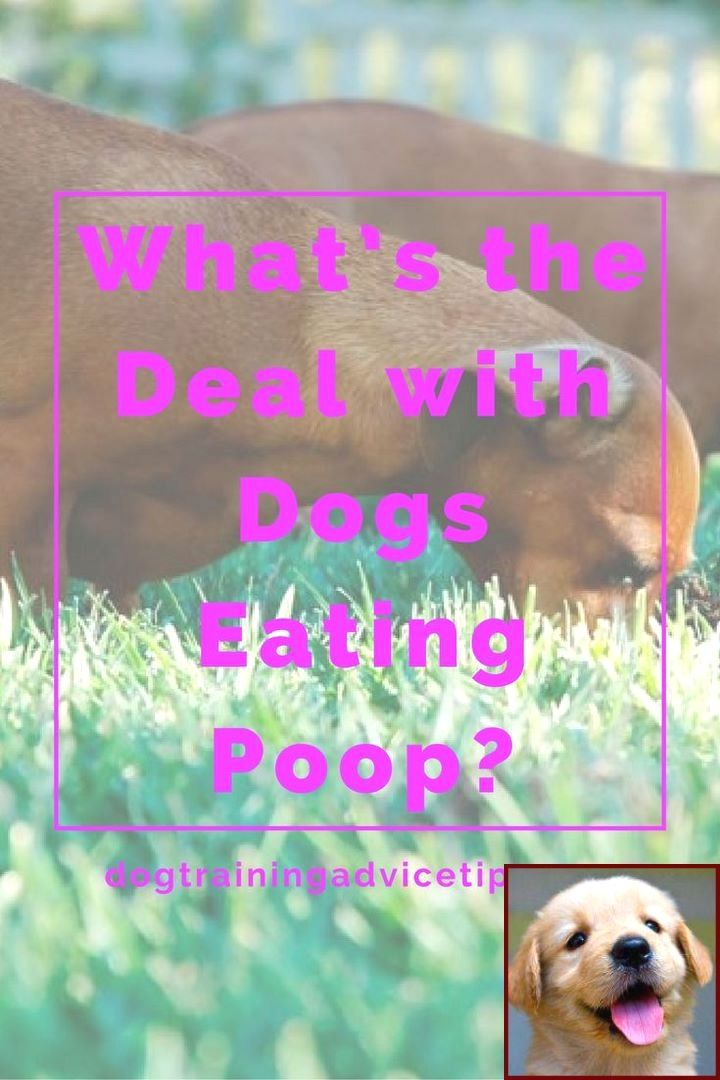 1 Have Dog Behavior Problems Learn About Dog Behavior Hiding Under Bed And Clicker Training Dogs Potty With Images Puppy Training Training Your Puppy