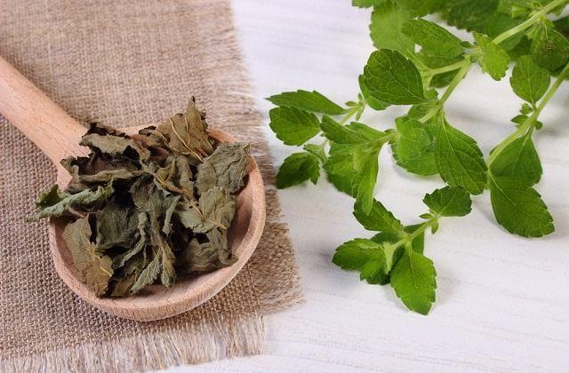 Usos, benefícios e propriedades dos diversos tipos de erva cidreira