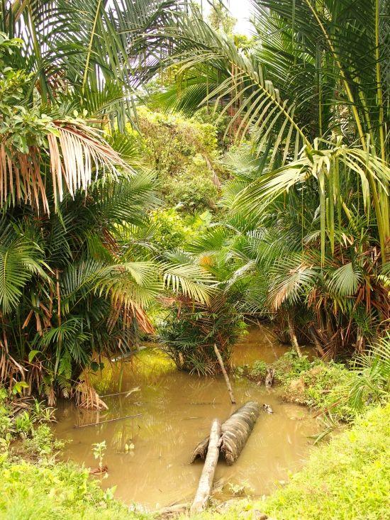 Mentawai Siberut Indonesia Sumatra http://meetyouatthebridge.nl/the-last-mentawai/