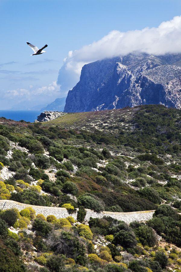 Dragonera Island in Serra de Tramuntana, Mallorca