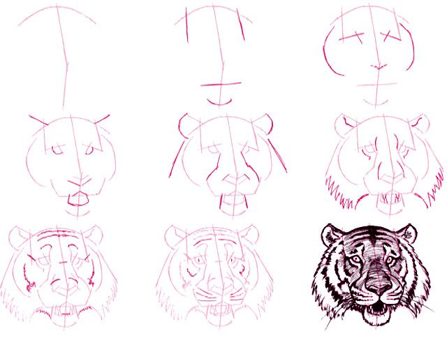 Learn to draw ... Tiger