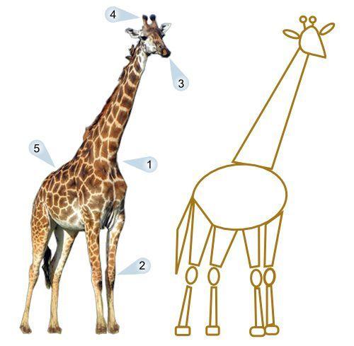 картинки жираф поэтапно нужны