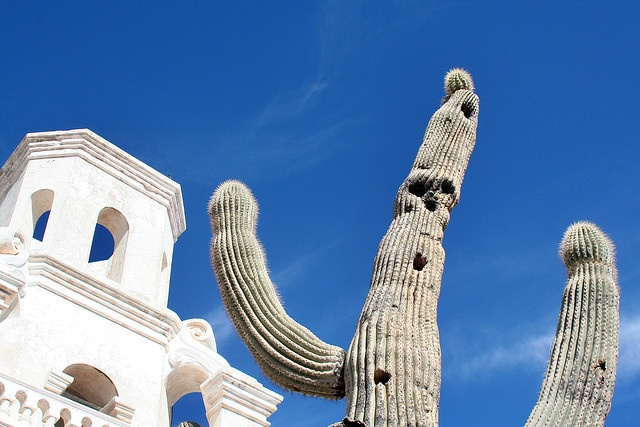 San Xavier Mission ~ Tucson, Arizona