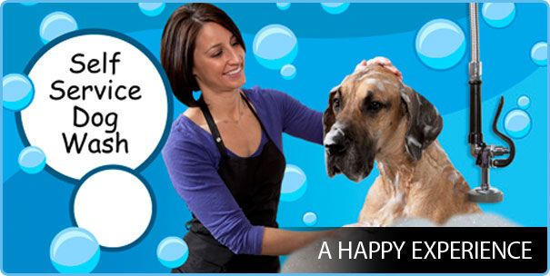 70 best dog and pet wash calgary images on pinterest a self service dog wash has become widely popular among pet owners this article throws light on some of the quality features that determine various solutioingenieria Choice Image