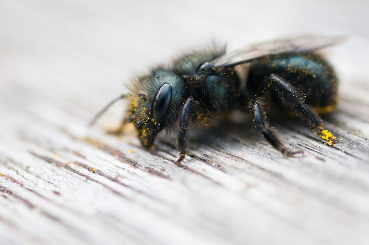 how to get bumble bees out of your house