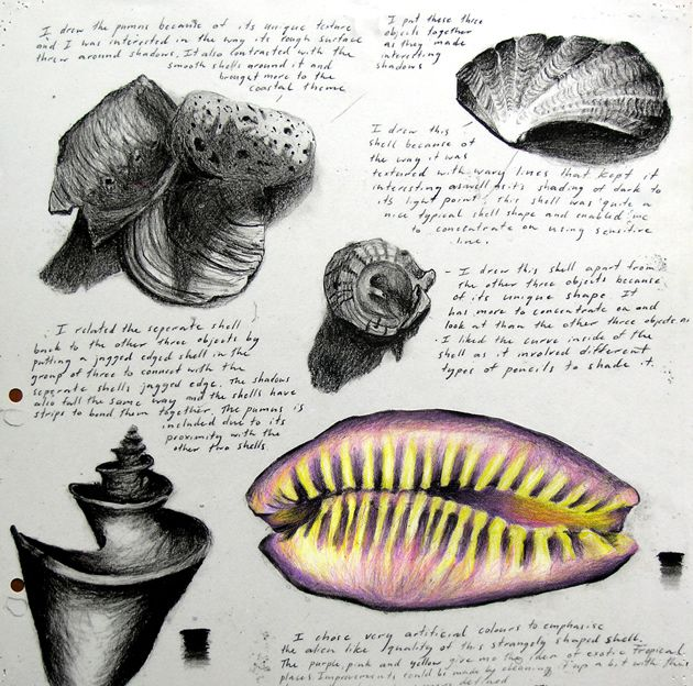 sketchbook of shell drawings, by IGCSE student Sarah Loh