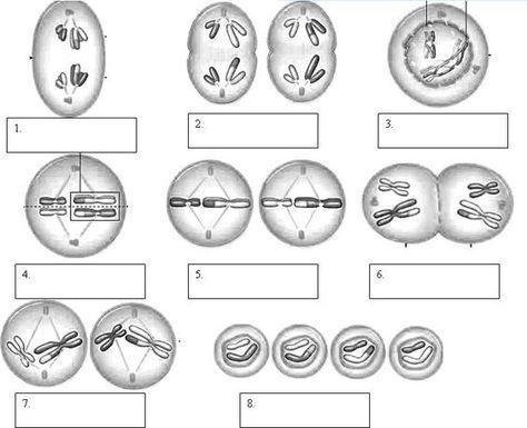 best 25 biology humor ideas on pinterest biology jokes science humor and science puns. Black Bedroom Furniture Sets. Home Design Ideas