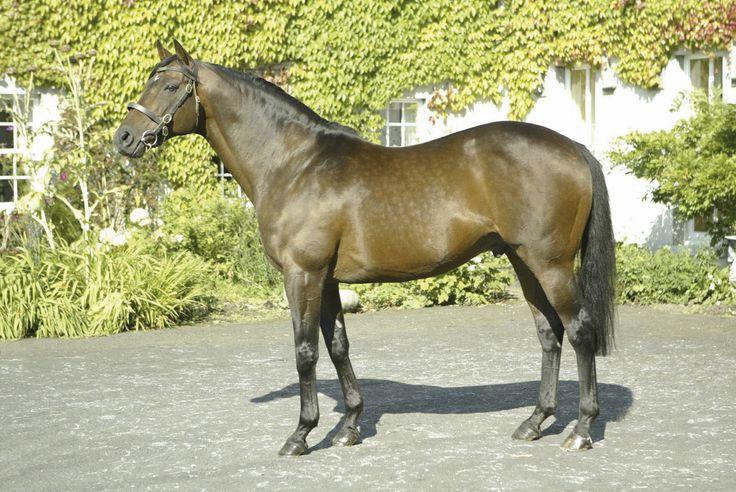 MILLKOM - Elite  TB - BAY (, foaled in 1991. Sire - CYRANO DE BERGERAC (TB). Dam - GOOD GAME (TB)